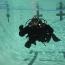 Dive Pic_6
