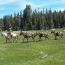 Mounted Posse Pic_3